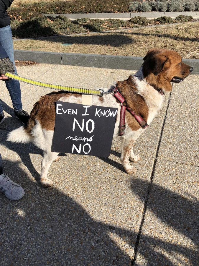 Protester Brings dog with his own little sign  Photographer - Casey Tremblay