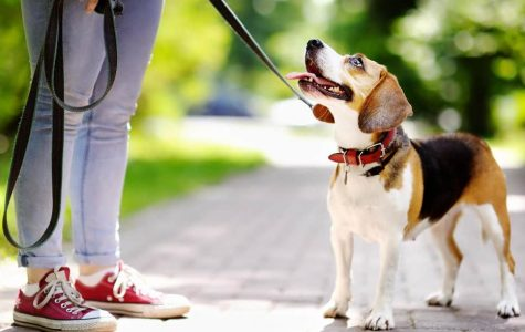 Boyertown considers dog-walking, Marco-Polo, other sports for 2020/2021
