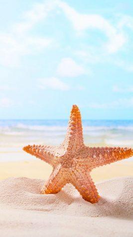 Sandy summer dreams