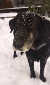 Shelby enjoying a snow day!