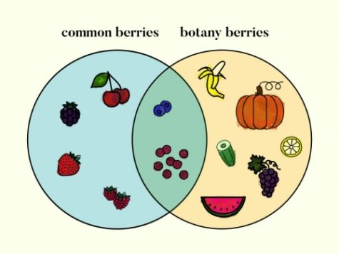 This Venn Diagram shows what fruits we believe are berries, and what fruit are true botanical berries... crazy, isnt it?